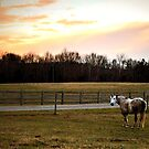 Horse at Sunset by Lauren Neely