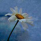 Daisy..... by DaveHrusecky