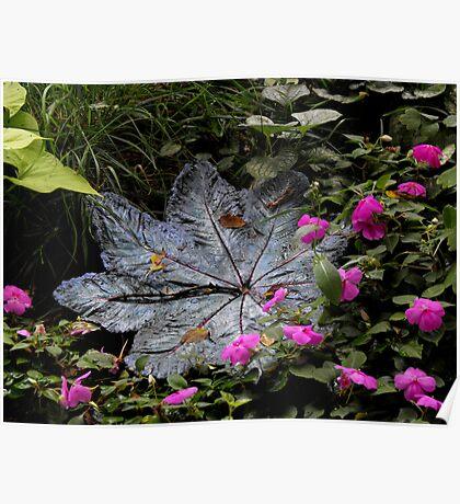 Ponds and Petals Poster