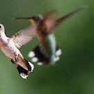 Shooting Hummingbirds! by barnsis