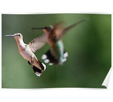 Shooting Hummingbirds! Poster