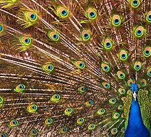 Funky-feathered Friend by Wanda Dumas