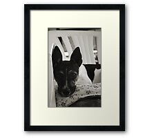 A Dog's Life Framed Print