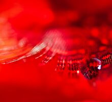 A single tear on red lashes... by Christine Kapler