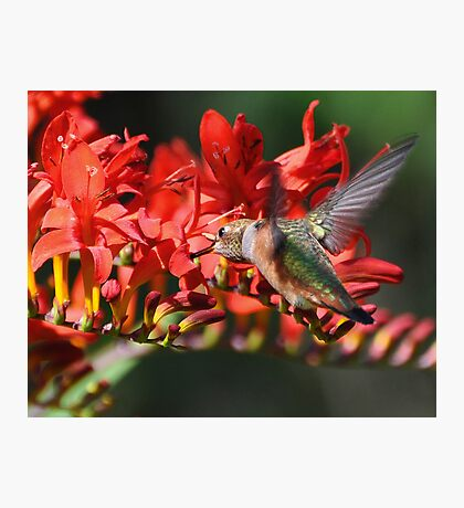 Eating on the Fly Photographic Print