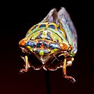 Cicada 3 by Tim Wright