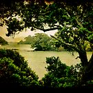 Taurikura Bay, Northland, New Zealand. by Lynne Haselden