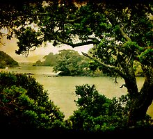 Taurikura Bay, Northland, New Zealand. by Lynne Haselden