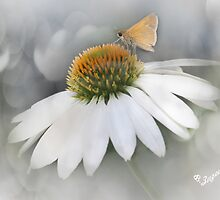 Little Skipper by Barbara Zuzevich