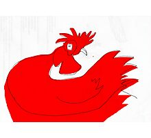 little red rooster Photographic Print
