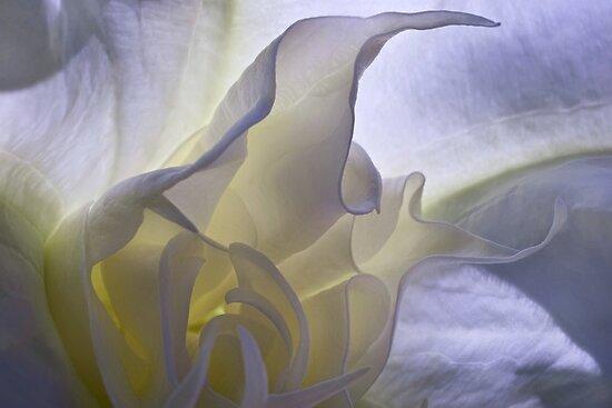 Angel's trumpet inner sanctum by Celeste Mookherjee