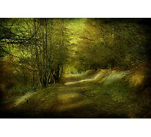 The Coppice. Photographic Print