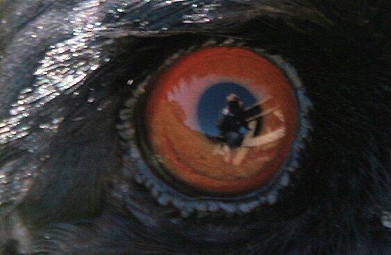 Reflections in a golden eye by Denzil