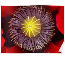 Heart of a Poppy Poster