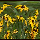 Noding Susans by Wayne King