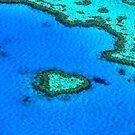 Heart Reef by Jill Fisher