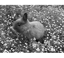 Bunny in Black & White Photographic Print
