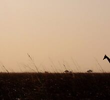 Giraffes at home - Waza National Park, Cameroon by stephangus