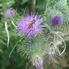 Insect on Thistle by Tanya Housham