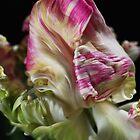Parrot Tulip Flower by Joy Watson