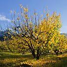 Yellow by Gustav Snyman