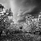 White Autumn by Gustav Snyman