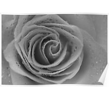 Black & White Wet Rose 2 Poster