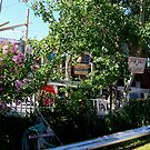 July 4 Lilacs by AuntieJ