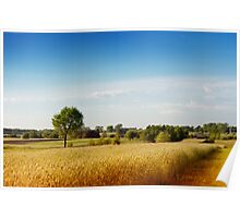 Rural wheat field view Poster