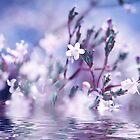 Waterfairies by ♛ VIAINA
