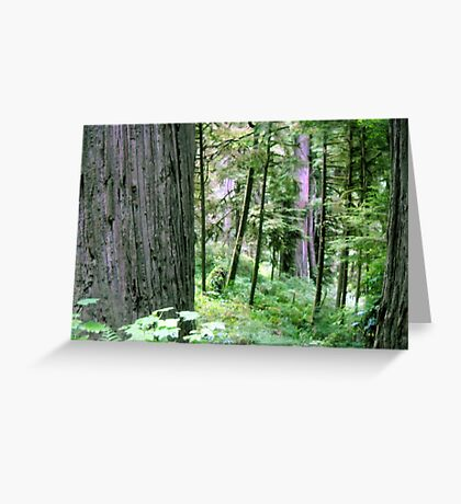 Forest Quiteness Greeting Card