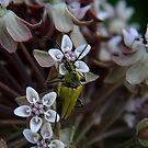 My First Bug Capture ! by Elfriede Fulda