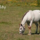 Kilty - NNEP Ottawa, Ontario by Tracey  Dryka