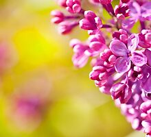 Spring lilac flowerets macro by Arletta Cwalina