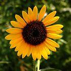 Sunshine by rtishner1