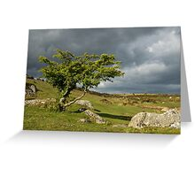 Lone tree on Dartmoor Greeting Card