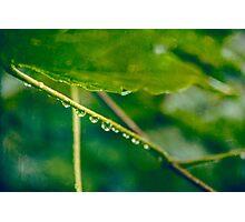 Rainy autumn leaves Photographic Print