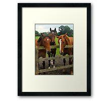 Three Horses come to say HI! Framed Print