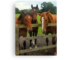 Three Horses come to say HI! Canvas Print
