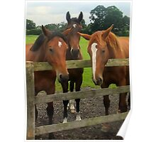 Three Horses come to say HI! Poster