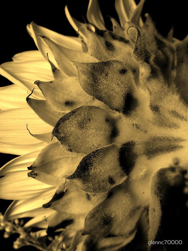 Split tone Sunflower - Sepia by glennc70000