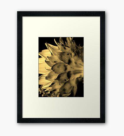 Split tone Sunflower - Sepia Framed Print