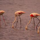 Flamingoes four by Sue Purveur