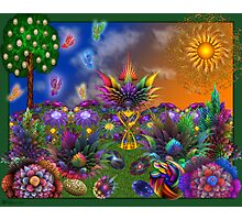 Apo Rainbow Garden Photographic Print