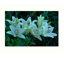 beautiful white lilies Art Print