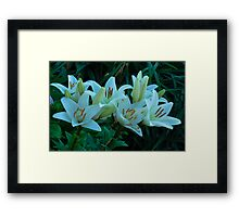 beautiful white lilies Framed Print