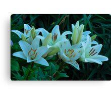 beautiful white lilies Canvas Print