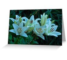 beautiful white lilies Greeting Card