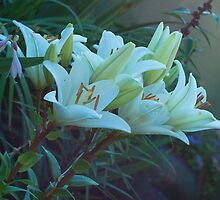 beautiful lilies by Eduard Isakov