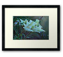 beautiful lilies Framed Print